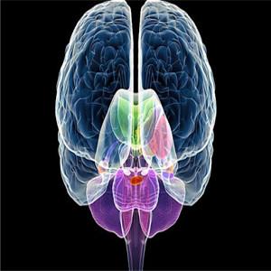 脑立方全脑教育